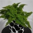 Easy plant craft DIY